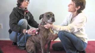 Simple Massage Video
