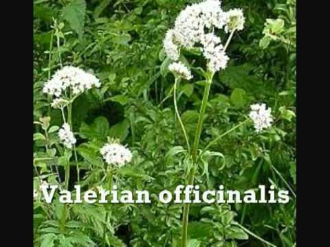 Growing Herbs For Beginners Module 6- Identifing Herbs
