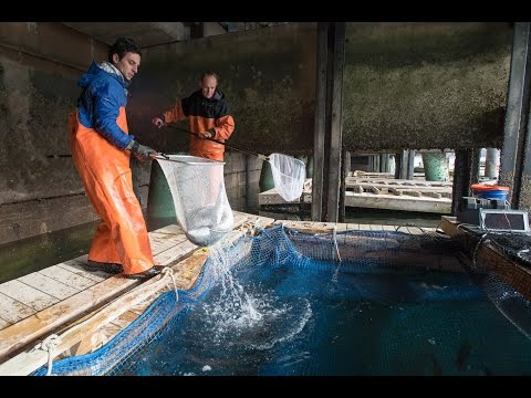 UNH Integrated Multi-trophic Aquaculture Research