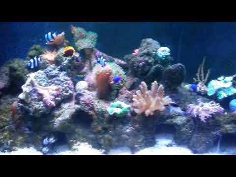 Maryport Aquarium Coral Tank