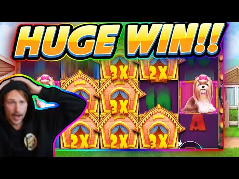 HUGE WIN!!! Dog House BIG WIN - Casino game from CasinoDaddy Live Stream - 동영상