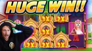 HUGE WIN!!! Dog House BIG WIN - Casino game from CasinoDaddy Live Stream