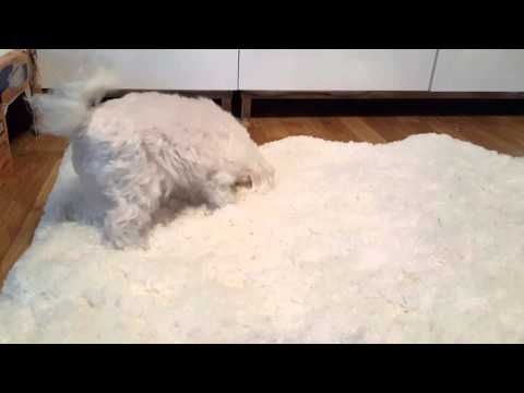 Sofie's New Faux Fur Rug