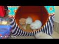 Kittens Playing Together So Fun In Weekend | Funny Kittens  2017 | Meo Cover Home