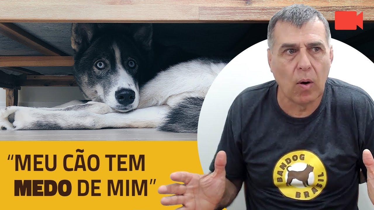 """""""Meu Cão Tem Medo de Mim""""."""