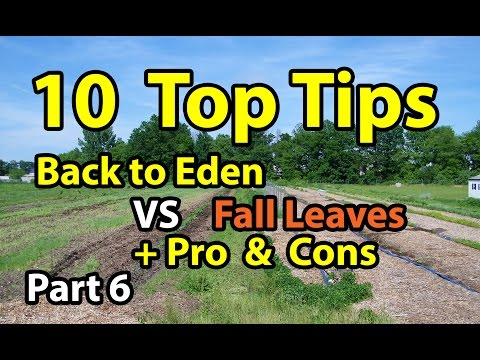 Back To Eden Gardening Method And Why It Works Doovi