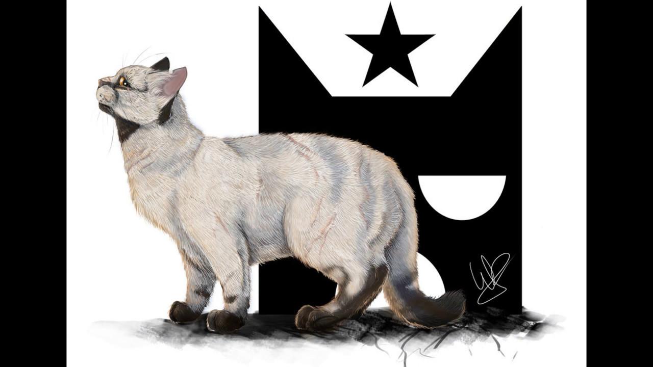 top 17 most unique warrior cat designs my opinion part 1