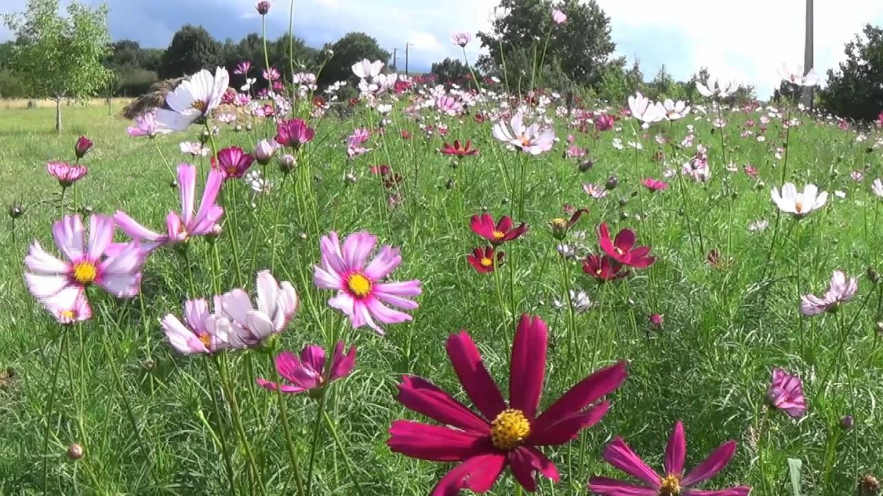 le jardin fleuri de marie c