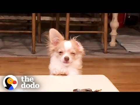 Funny Guilty Dogs Compilation | The Dodo