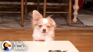 funny-guilty-dogs-compilation-the-dodo