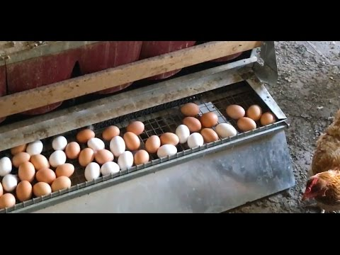 Chickens in a Grain Bin Silo - Best Nest Box