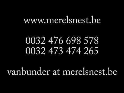 Henrico Van 't Merelsnest Z °2019 05 19 (2020 04 02)