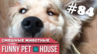 СМЕШНЫЕ ЖИВОТНЫЕ И ПИТОМЦЫ #84 АВГУСТ 2019 | Funny Pet House