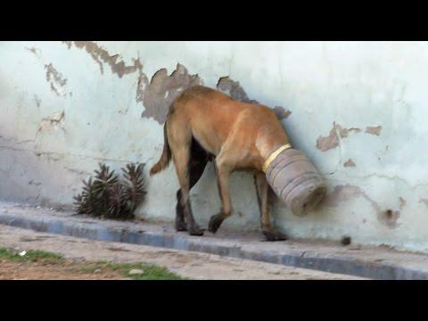 10 amazing animal rescues!