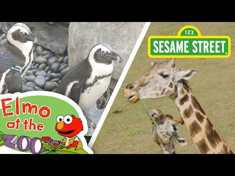 Sesame Street: Learn About Animals with Elmo! | Elmo at the Zoo