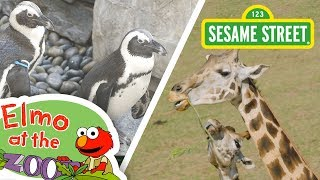 Sesame Street: Learn About Animals with Elmo! | Elmo at the Zoo Compilation