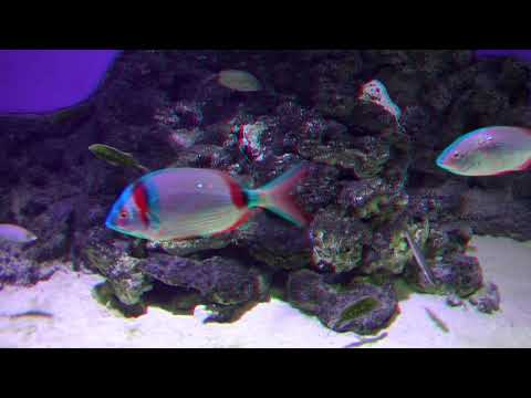The Blue Planet Aquarium Copenhagen HD 3D Anaglyph