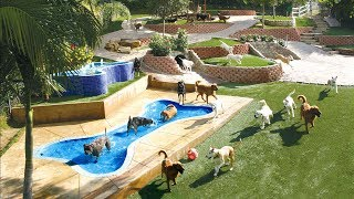 Canyon View Ranch - Dog Boarding - Topanga, CA