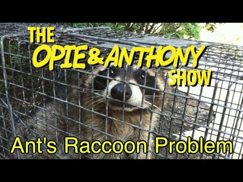 Opie & Anthony: Ant's Raccoon Problem (07/28, 08/09 & 08/16/10)