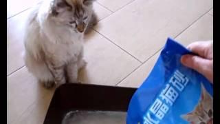 Silica Gel Cat Sand