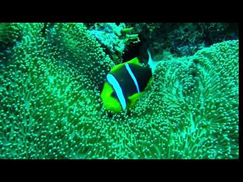 Palau Sealife 2017