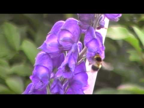 Poisonous Plants 1-2-1 Bees and Toxic Nectar