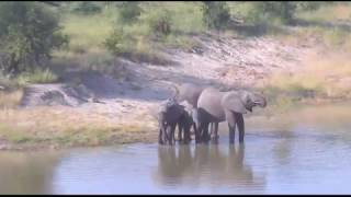 March 30, 2017- When you think nothing is going on at Djuma Waterhole- LOOK AGAIN thumbnail
