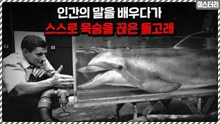 인간의 말을 배우던 돌고래가 스스로 목숨을 끊어버린 이…