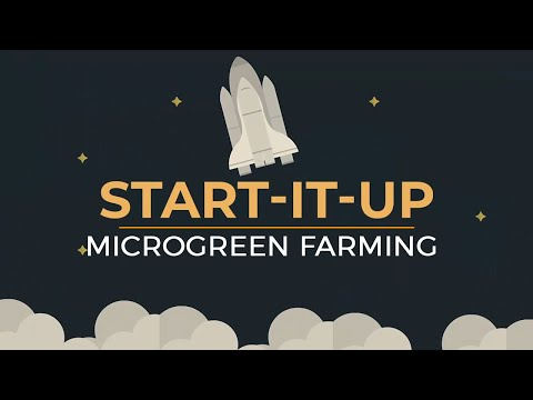 [Start-it-up] How To Start Microgreen Farming Business?