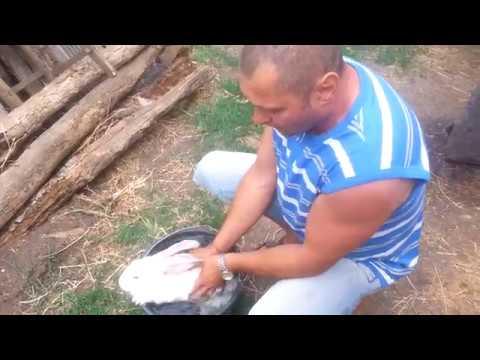 Как спасти кроликов от жары видео