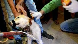 كلب يتعذب منذ فتره ويحتاج مساعده مع جمال العمواسي