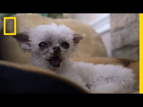 Inside a Dog Retirement Home | National Geographic