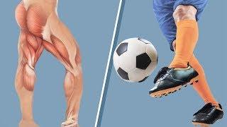 Проблемы передне-заднего равновесия. Тонус ягодичной мышцы, конструкция тенсегрити, мышечные цепи