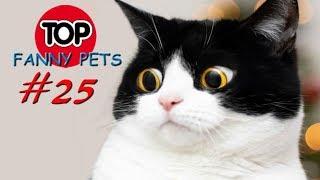 ПРИКОЛЫ 2019 ТОП СМЕШНЫХ ВИДЕО С КОТАМИ Смешные животные Смешные кошки TOP FUNNY PETS 25