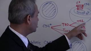 T Cells - Immunology - Lecture 6 part 1/6