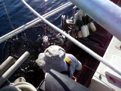 Central California Black Cod Trapping