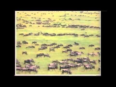 Amazing Animals: Animal Journeys (Part 2 of 2)