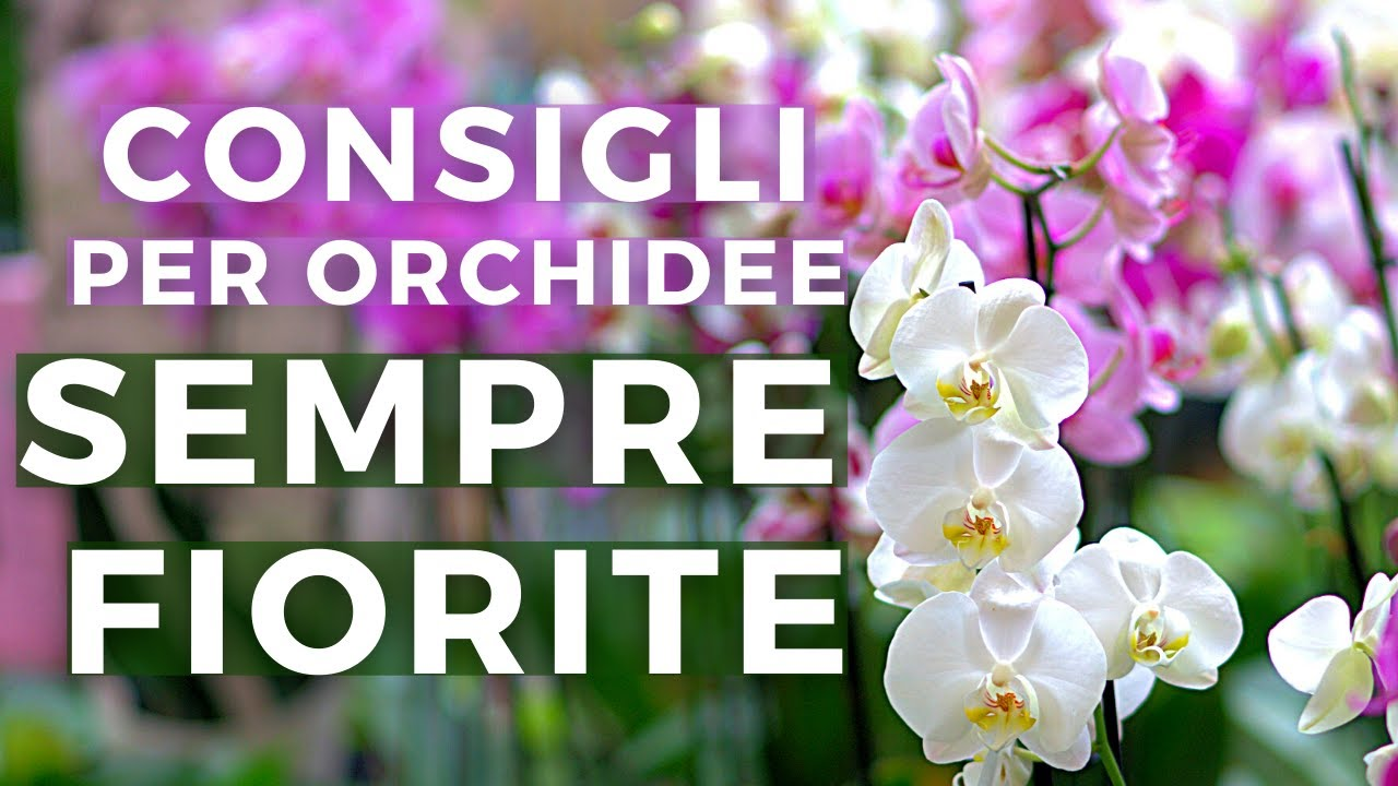Download COME FAR RIFIORIRE LE ORCHIDEE | i miei consigli