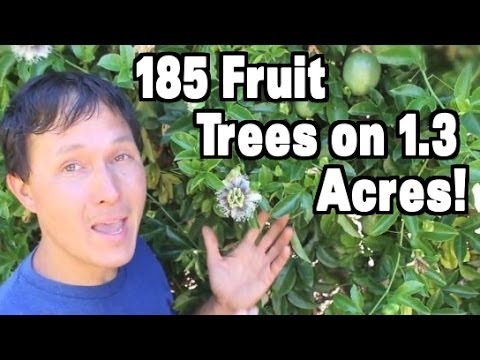 Organic Tropical Fruit Orchard Grows 185 Trees on 1.3 Acres