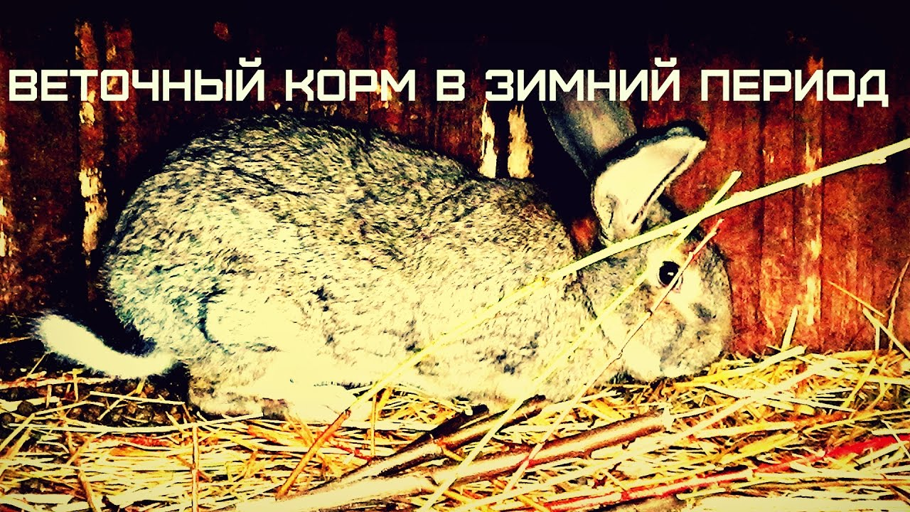 Кормление кроликов,веточный корм.