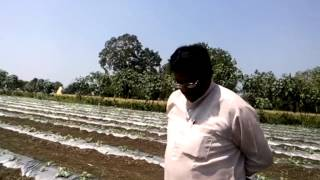 Video 06 TARBOOJ CROP ALEGAONKAR SAHEB 1st VISIT download MP3, 3GP, MP4, WEBM, AVI, FLV November 2017