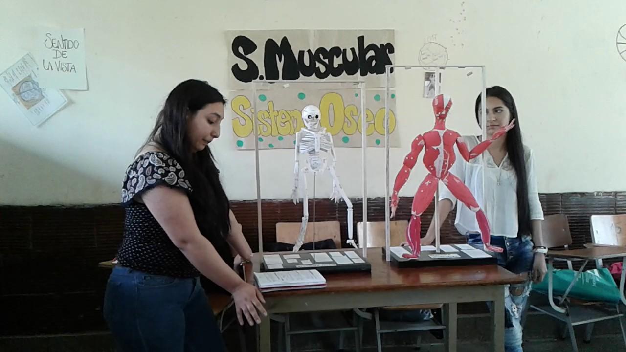 exposición sistema musculo- esquelético - YouTube