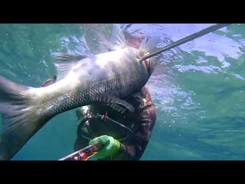 Spearfishing Labrax, Seabass, Orata, sarago , Aegean sea Zıpkınla balık avı levrek cipura sargoz
