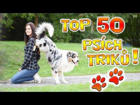 TOP 50 PSÍCH TRIKŮ PŘEDVÁDÍ PES AKIM!