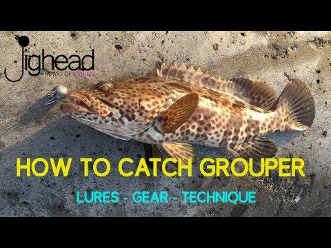 JIGHEAD TV: How to catch GROUPER (Hamour) on shore  - Rock fishing guide