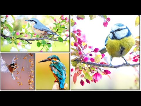 Colorful Birds - Most Relaxing Video | வண்ணமயமான பறவைகள் | Most Satisfying Video | Love birds