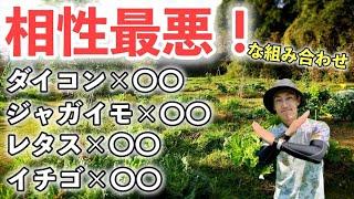 【相性最悪?】一緒に植えてはいけない野菜の組み合わせ5選