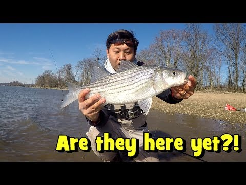 Are The STRIPERS RUNNING The Delaware River Yet!? (Claymont, DE)
