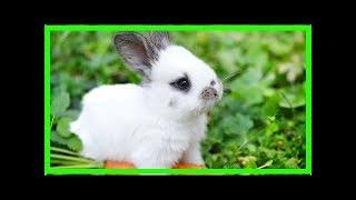 Die Verdauung beim Kaninchen – Das macht sie besonders
