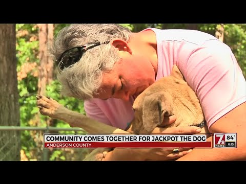 Neighbors Come Together To Nurse Dog Back To Health